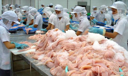 Chế biến cá tra xuất khẩu tại một nhà máy ở miền Tây.